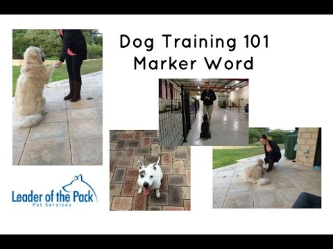 dog-training-101---marker-word---conditioned-reinforcer
