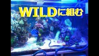 夜明けのサンゴTV 119話 水槽にサンゴを入れました ライブロックの洞穴...