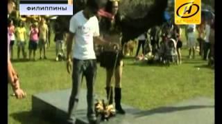 Необычная выставка собак-супергероев, Филиппины