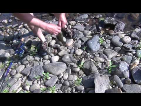 Delaware River & Canal Fishing, Bucks County, PA  June 2016