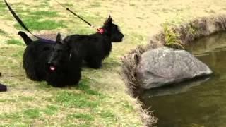 錦織公園の池に大きな鯉がウジャウジャ泳いでいました。