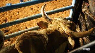 Rodeio de Arandu 2018 - FINAL