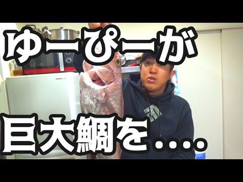 ゆーぴーが巨大鯛を釣ってきたから宴を開く!!