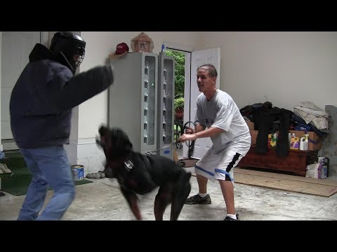 Shutzhund Vs Real Protection Dogs