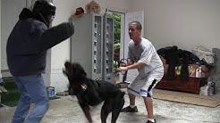 Shutzhund vs Real Protection Dogs