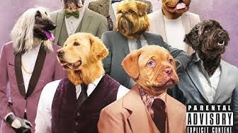 Roope Salminen & koirat - Sokerimama