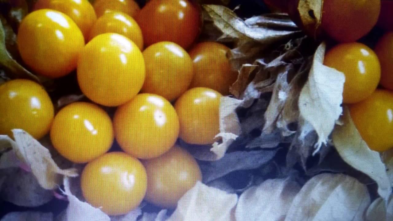Cuales Son Algunas Frutas De Puerto Rico Youtube