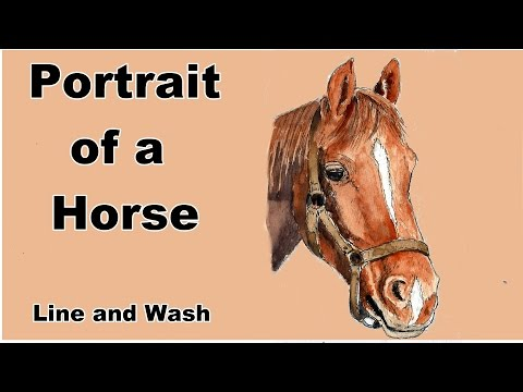 how to draw and paint a horse portrait in line and watercolor wash