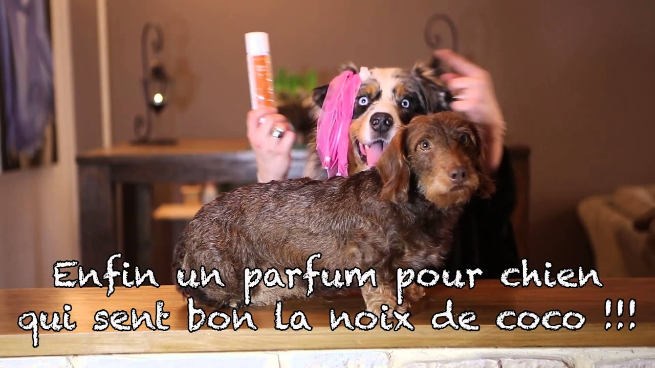 parfum coco pour chien youtube. Black Bedroom Furniture Sets. Home Design Ideas