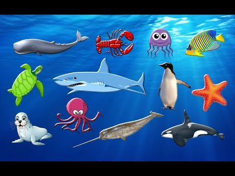 Learning Sea Animals Names | Water Ocean For Children -Learning For Kids.