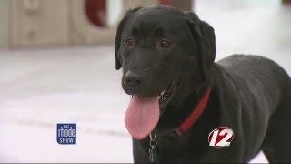 Rhode Island's First Indoor Dog Park