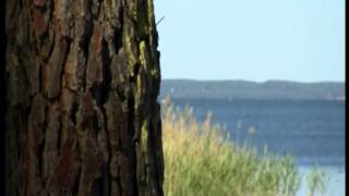 Lac Landais - Lac de Cazaux et Sanguinet