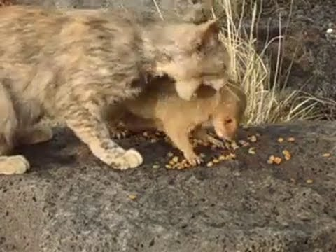 cat vs mongoose youtube