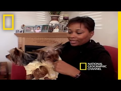 Pampered Pets  National Geographic