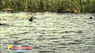 Pesca Dinâmica - Tucunarés na Represa Sérgio Motta e tilápias em Curitiba - Parte - 1
