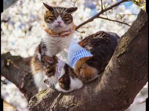 Нэко  - японский кот