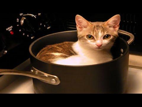 6 Surprising Cat Eating Countries