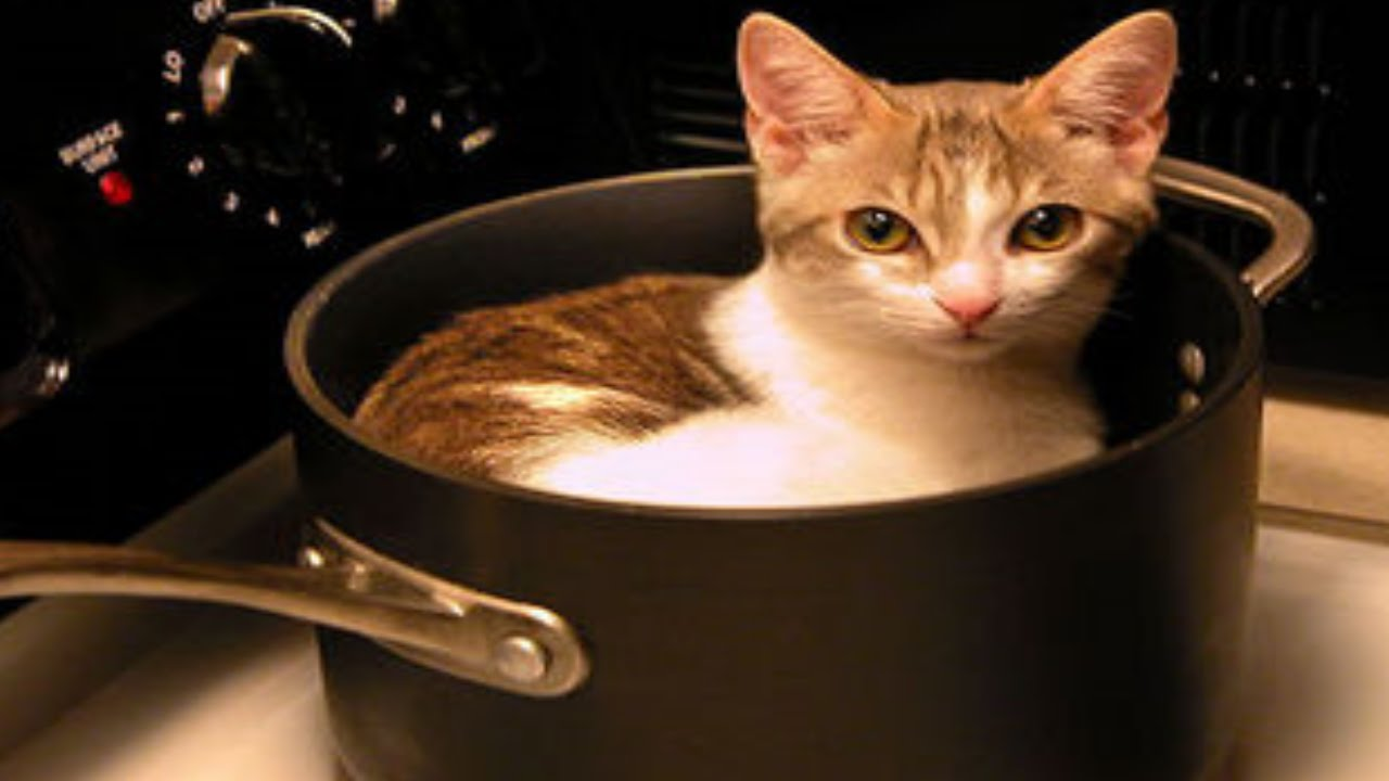 Eat Cats Switzerland
