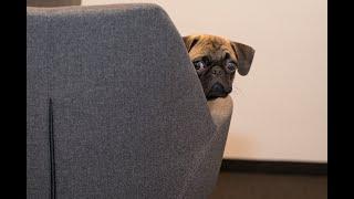 Я РЖАЛ ПОЛ ЧАСА СМЕШНЫЕ ЖИВОТНЫЕ ПРИКОЛЫ С КОТАМИ И СОБАКАМИ ЛУЧШИЕ ПРИКОЛЫ Funny Pets 3