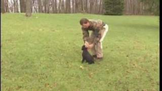 Teach Puppy to Sit- how to teach a puppy to stay