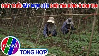 Phát triển trồng cây dược liệu dưới tán rừng ở Kon Tum