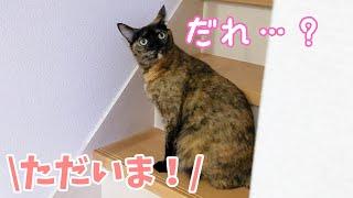 日帰り旅行から帰宅したときの猫の反応がこちら…!