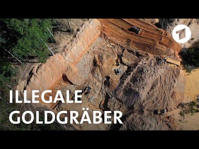 Der neue Goldrausch im Amazonas   Weltspiegel