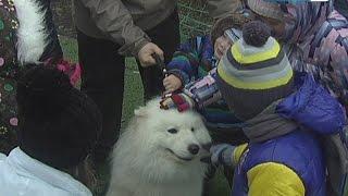 Собаки-терапевты собрали деньги на звериный приют