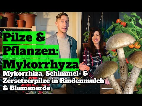 pilze-&-pflanzen:-mykorrhiza,-schimmel--&-zersetzerpilze-in-rindenmulch-&-blumenerde.
