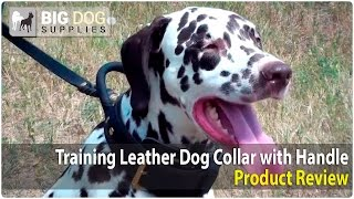 Dalmatian And Other Canines Wearing Training Leather Dog Harness