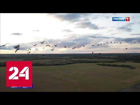 Вопрос: Какие сроки прилета птиц и их отлета на зимовку?