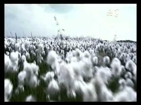 Семена ясеня, вяза и клена - Фото 5426-29
