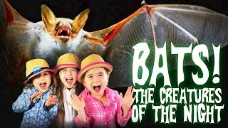 Bats for Kids | All About Bats | Bats: The Creatures of The Night