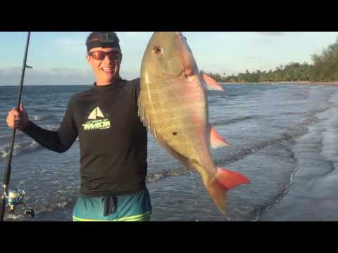 CATCHING HUGE PUERTO RICAN FISH FROM THE SHORE: Healy Outdoors