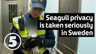 Tunnelbanan | Fånga fiskmåsen! Catch the seagull!