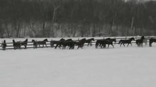 Mares in snow 2_9_10.wmv