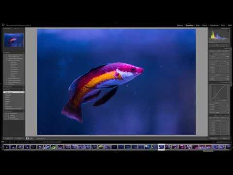 How I Develop my Aquarium Images
