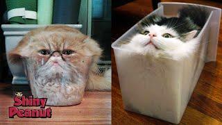Apakah Kucing Benda Padat Atau Cair?