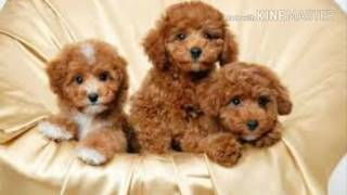 Картинки собачек♡♡♡
