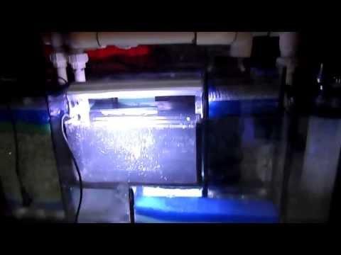 aquarium-diy-sump-filter,sump-super-compacto-acuarios-marinos-(parte5)-haciendo-pruebas