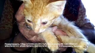 Пенсионерка принесла домой больного котенка и началось... Эпидемия котят.