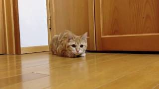 Epic laugh : Funny and Cute Cats Videos Compilation (2019)-Funny cat Videos #1