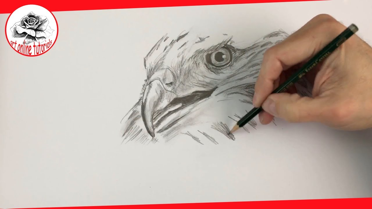 How to Draw a Hawk with Pencil Step by Step - Pencil ...