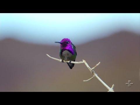 O desenvolvimento das 87 espécies de beija-flor no Brasil