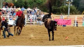 Whoa Cowboy! Florida Rodeo Bucking Broncos Got Dance Moves