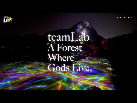 VOLVO teamLab: A Forest Where Gods Live