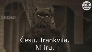 Kata Muzika Spektaklo Feliĉo Subite – esperanto music | Смешные приколы с котами |  Music Show 89