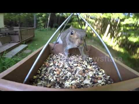Bird Feeder GoPro: Seed Thieves (Chipmunk & Squirrel)