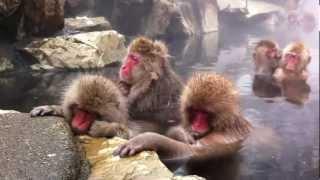 2011年被外國人票選為前十大日本最想造訪的美景,也是全世界十大溫泉第...