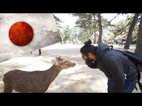 BOWING DEER JAPAN! - Japan's Polite Bowing Deer in Nara!